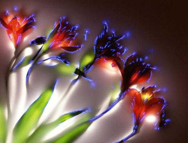 glowing flowers kirlian_art2_f