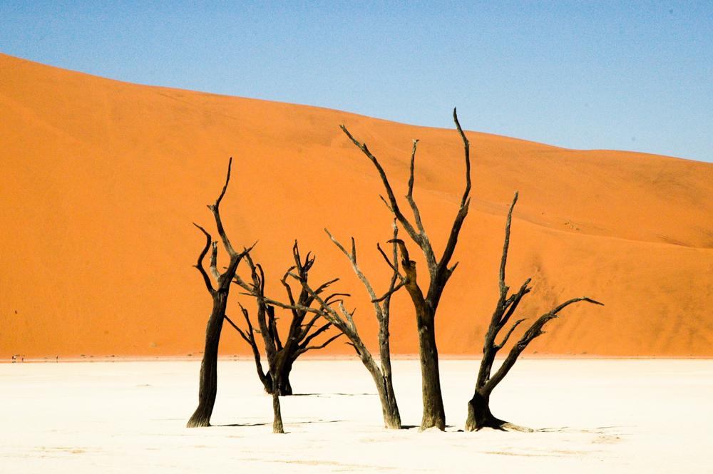 Acacia trees in Deadvlei, Namibia